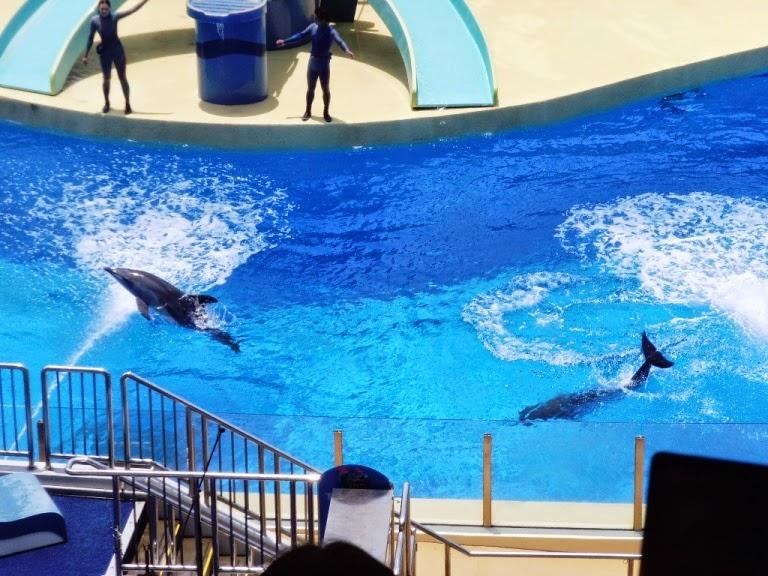 animal show ocean park