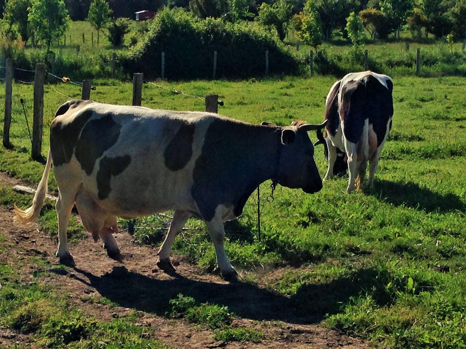 La Laiterie de Paris : La ferme de Logodec ou comment vivre avec ...