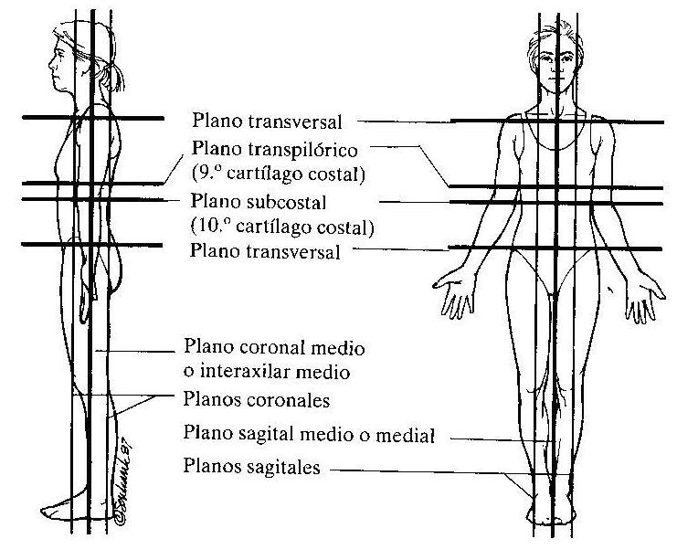 RADIOLOGIA e IMAGEN CETIS 76: Regiones Anatomicas Radiologicas