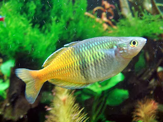 rainbow fish 3