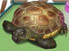 Kaplumbağa bakımı oyunu oyna