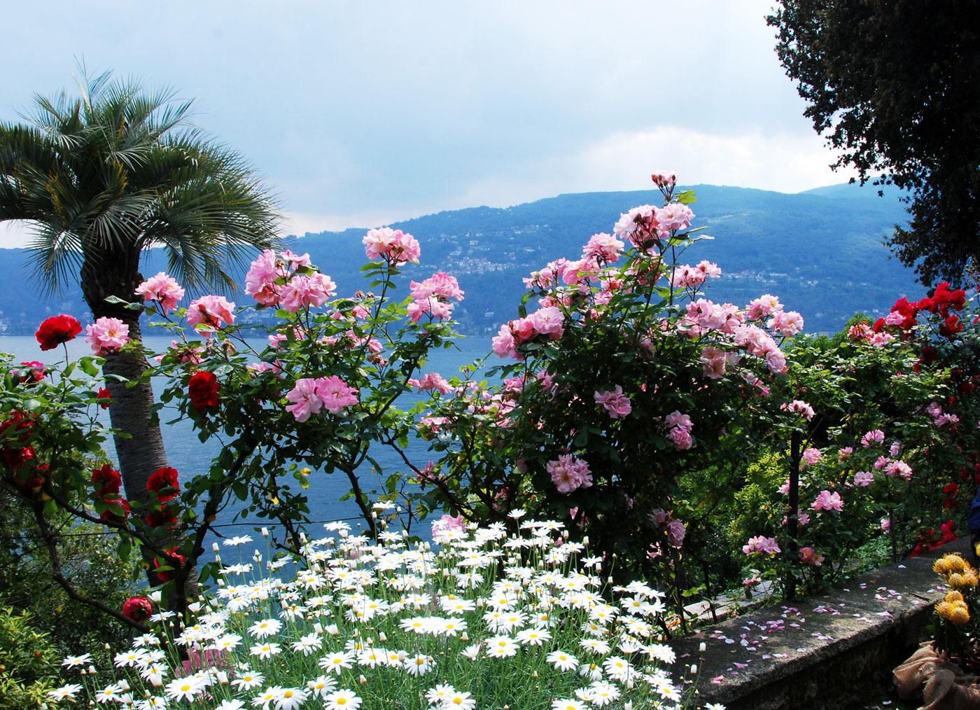 Il mondo in un giardino: La terrazza delle protee