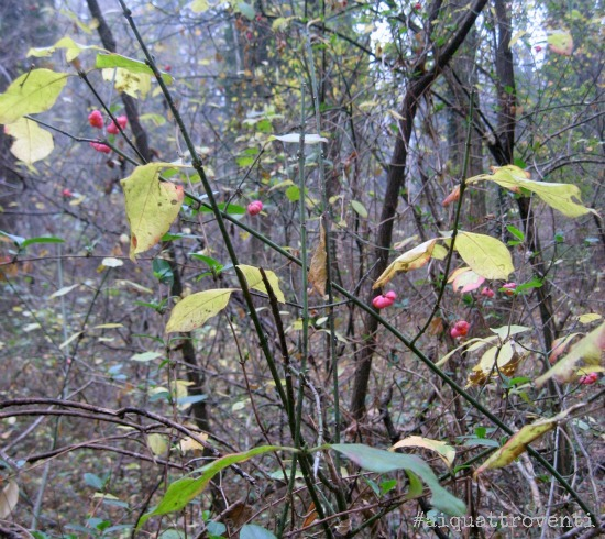 aiquattroventi-autunno-bacche
