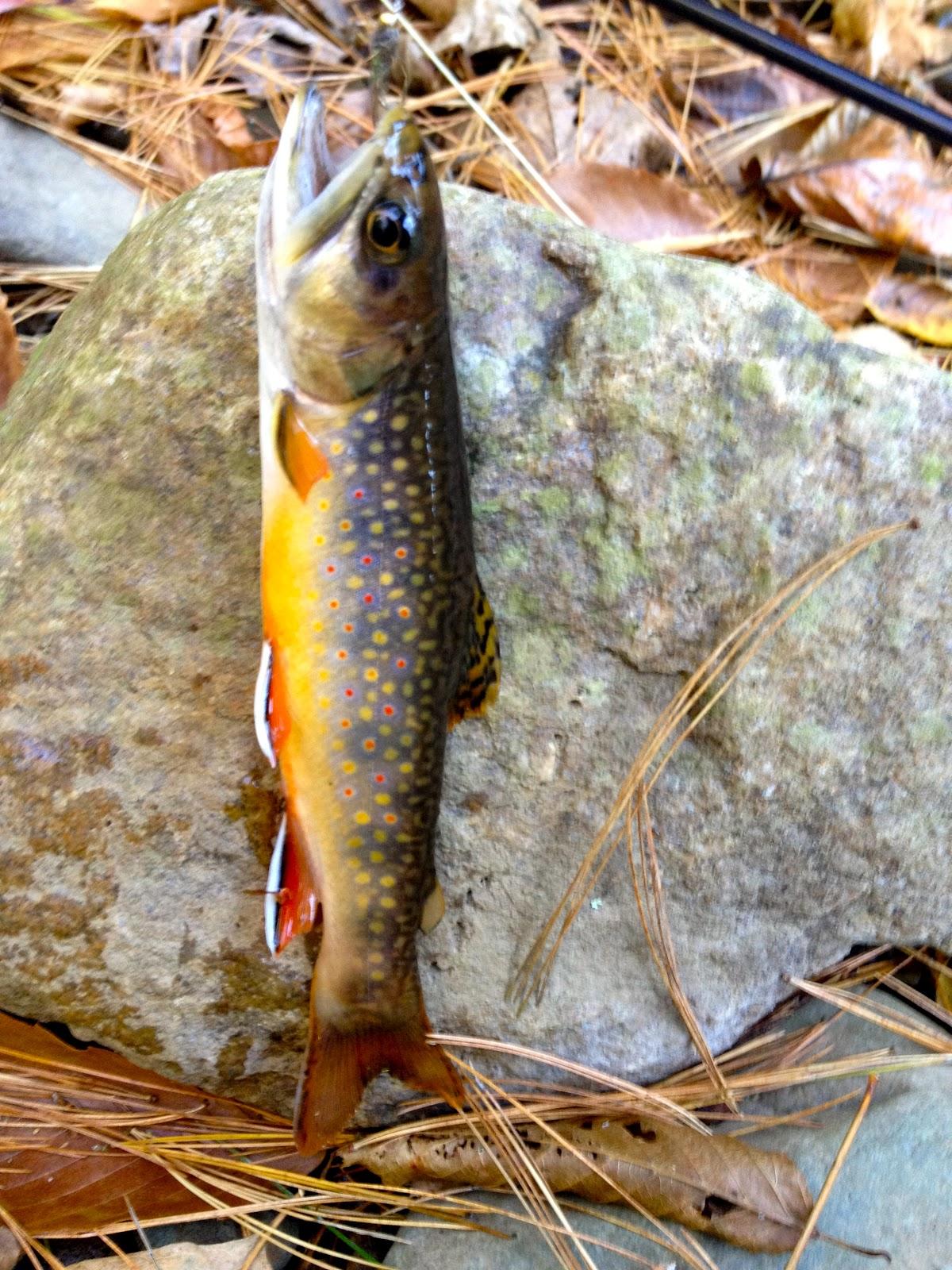 Virginia medical fly fishing for Trout fishing va