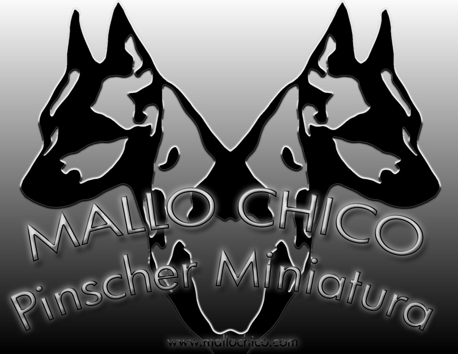 MALLO CHICO