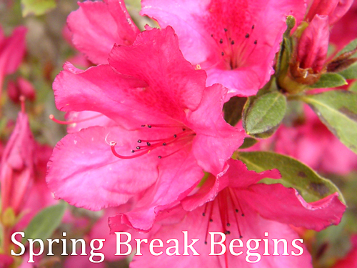 A homeschool mom plans spring break activities