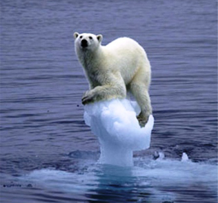 global warming - polar bear extinction
