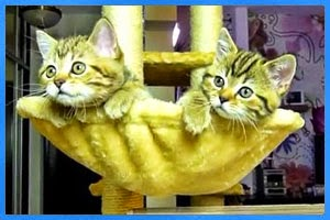 Katzenbabys gucken Tennis