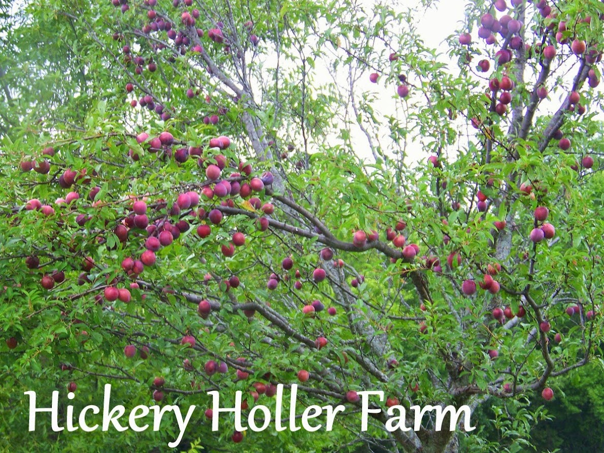 Hickery Holler Farm