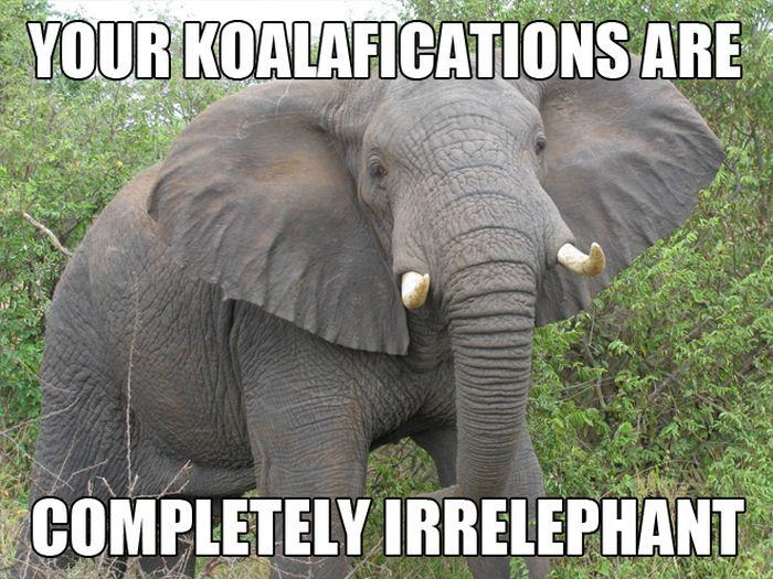 funny all animals memes photographs funny and cute animals