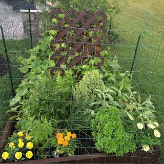 DIY Garden Fence & Gate