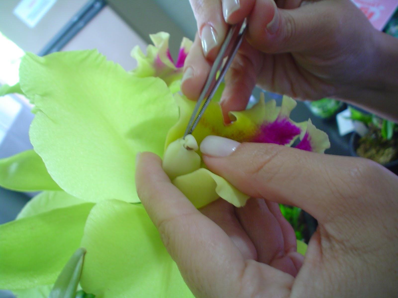Reprodução de Orquideas