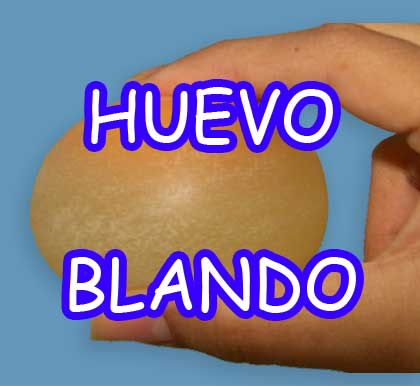 http://experimentofisicaescolar.blogspot.com/2014/07/huevo-blanco-luego-de-7-dias.html