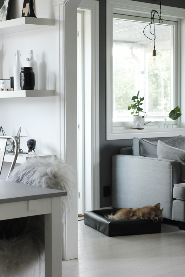 pomeranian, hund, soffa, vardagsrum, matsal, hyllor, matgrupp, vitt, svart och vitt, grått, grå, vitt golv, inredning inredningsbloggg, bloggar, webbutik, webbutiker, webshop, nettbutikk, nettbutikker,