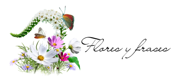 Flores y frases