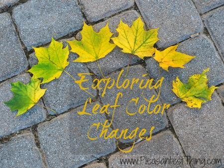 Exploring leaf color changes
