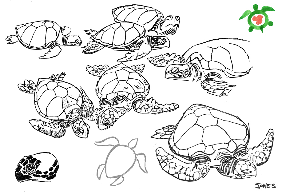 Line Drawing Sea Turtle : Sea turtle line drawing