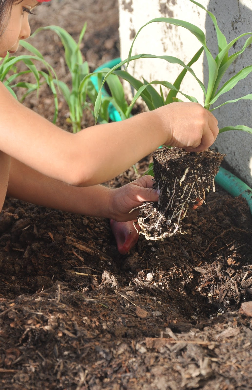 Home grown montessori dirty hands big mind a lesson in for Big hands for gardening