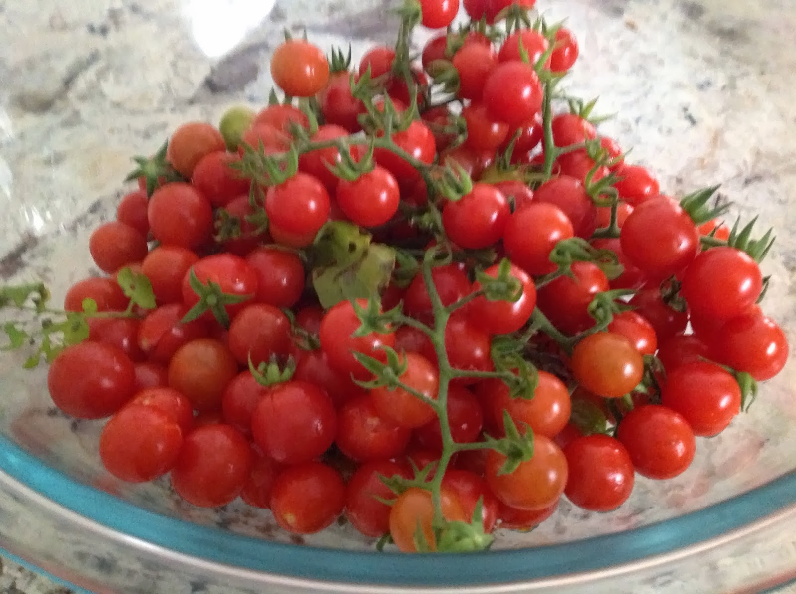 freshly picked bowl of cherry tomatoes with stems