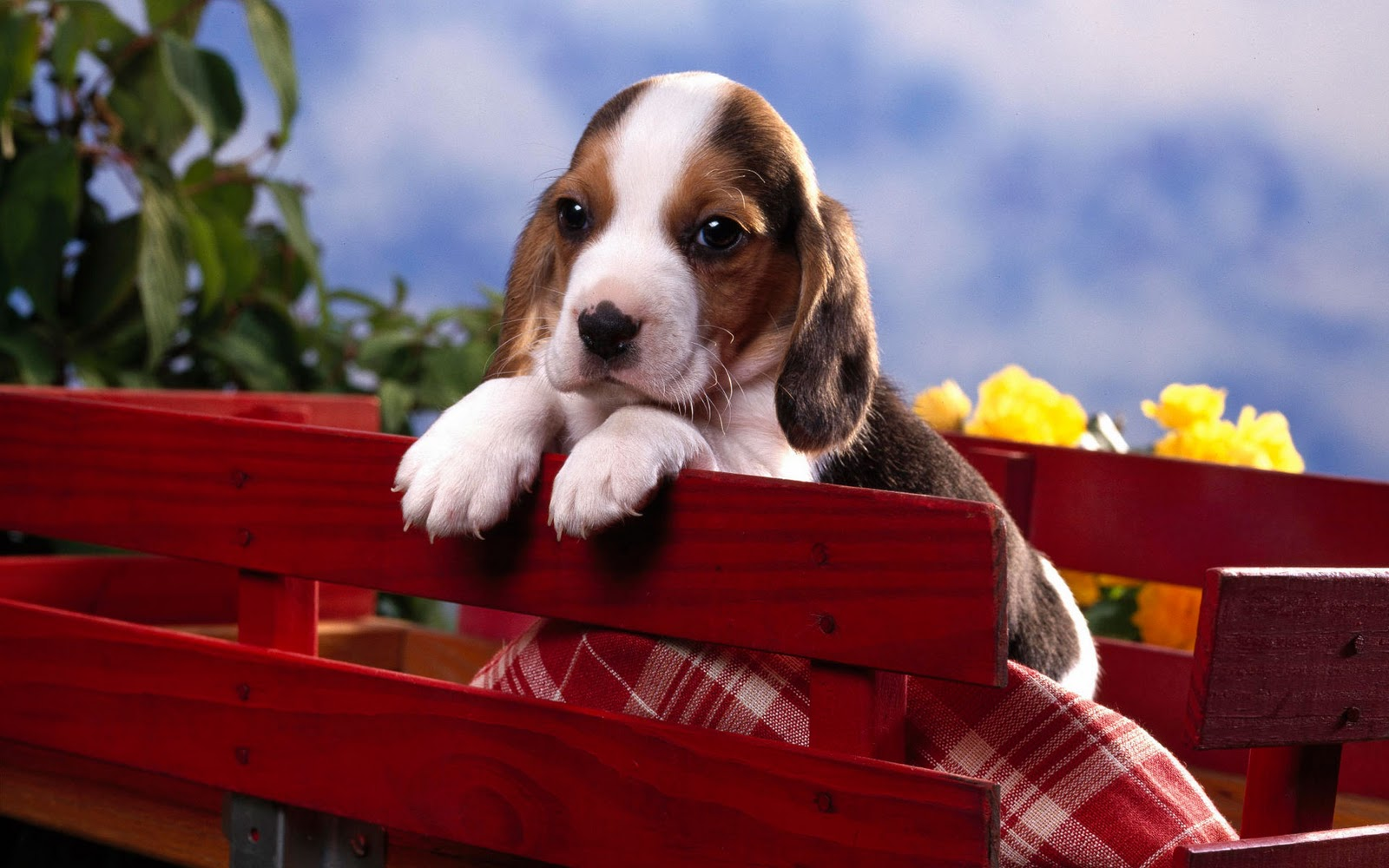 Beagles Puppies Wallpapers Christmas wallpapers