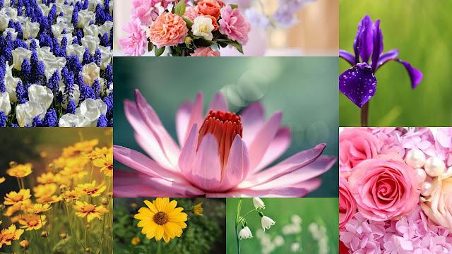 Imágenes de Hermosas Flores para San Valentin