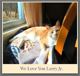 Our Resue Cat Larry Jr.