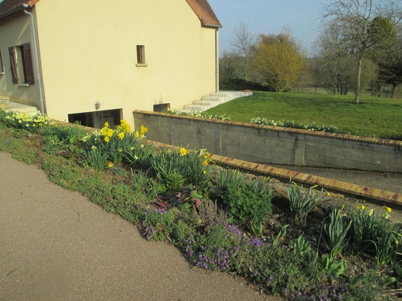 Dans mon jardin mars 2015 for Jardin mars 2015