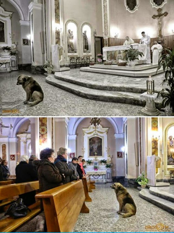 Dog at Mass