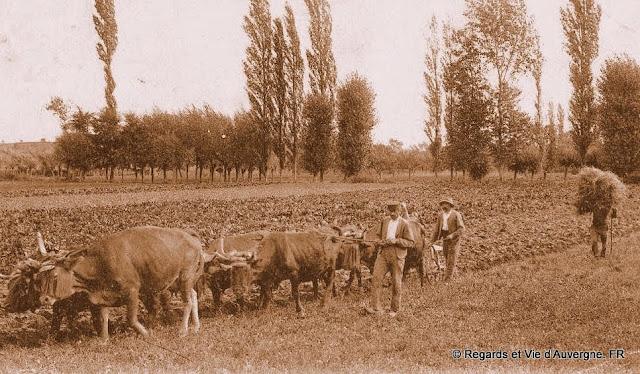 cpa laboureur Auvergne