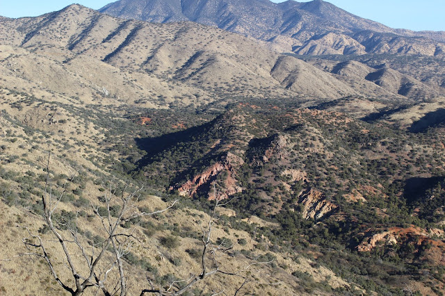 Coues%2BDeer%2BCountry%2Bwhile%2Bglassing%2Bin%2Bsonora%2Bmexico%2Bwith%2Bcolburn%2Band%2Bscott%2Boutfitters%2B1.JPG