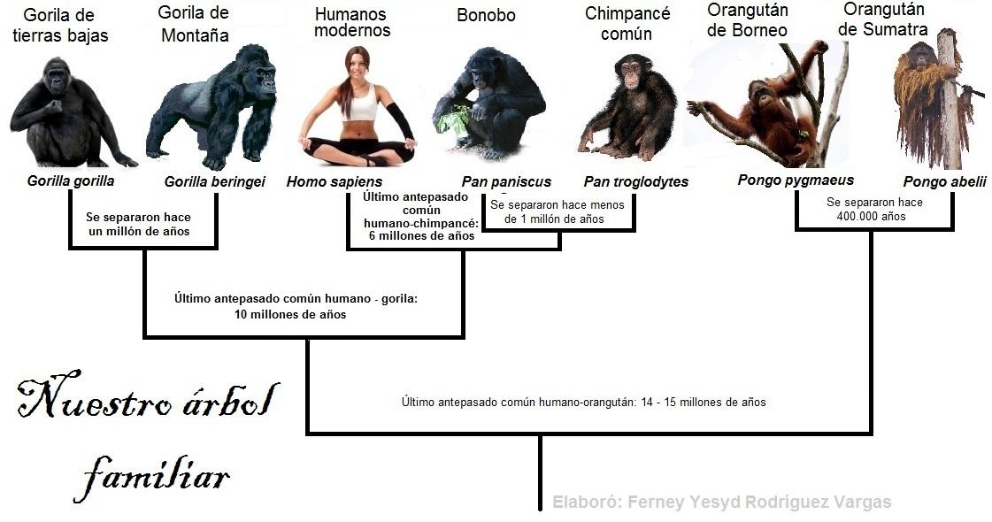 Blog Sin Dioses: Genoma del Gorila reivindica la evolución humana