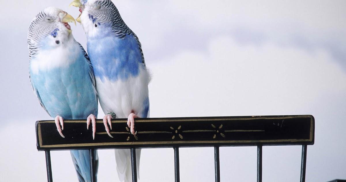 Love Birds Quotes Wallpaper : wallpapers: Love Birds Desktop Wallpapers