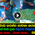 Vegetable Trader with amazing Talent (Watch video)