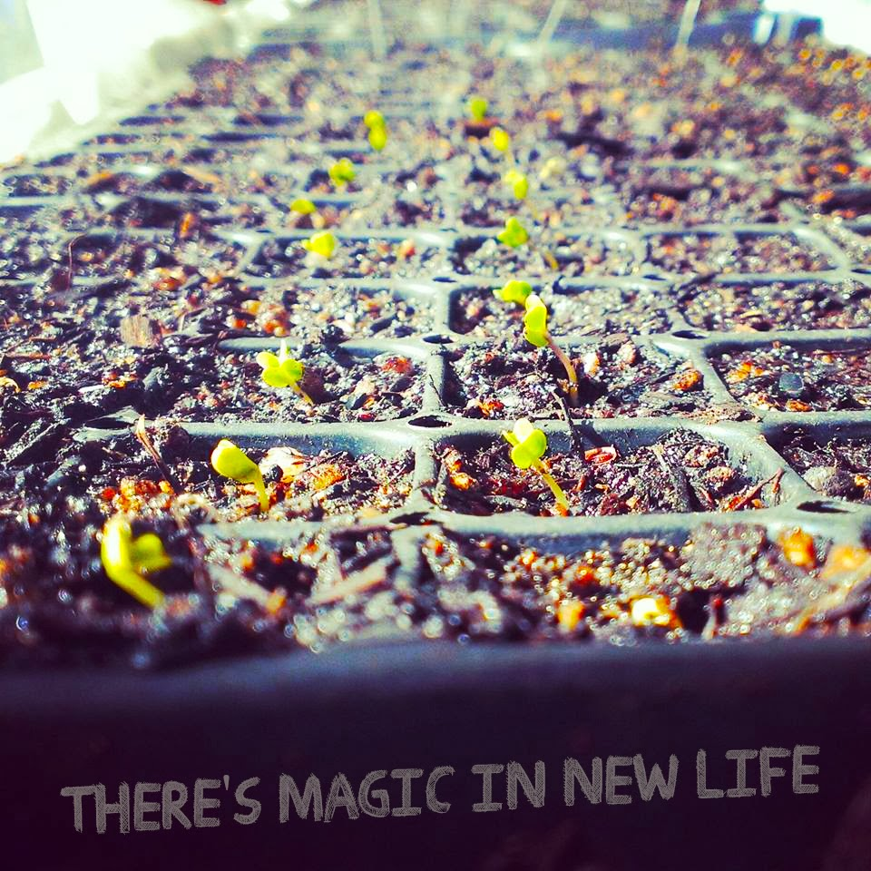 There's magic in new life