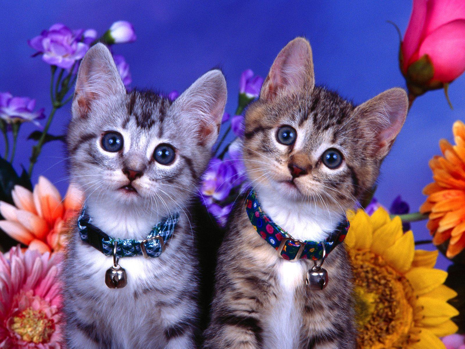 gambar kucing animasi