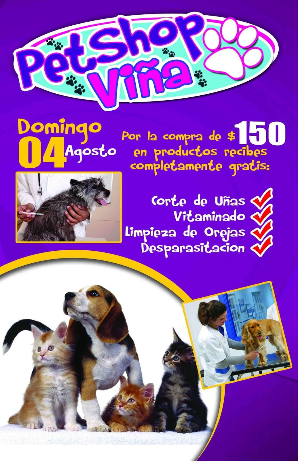 Lineas Graficas Flyer Pet Shop