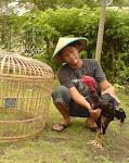burung cilacap