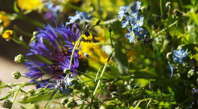 Buket af havens og grøftekantens vilde blomster