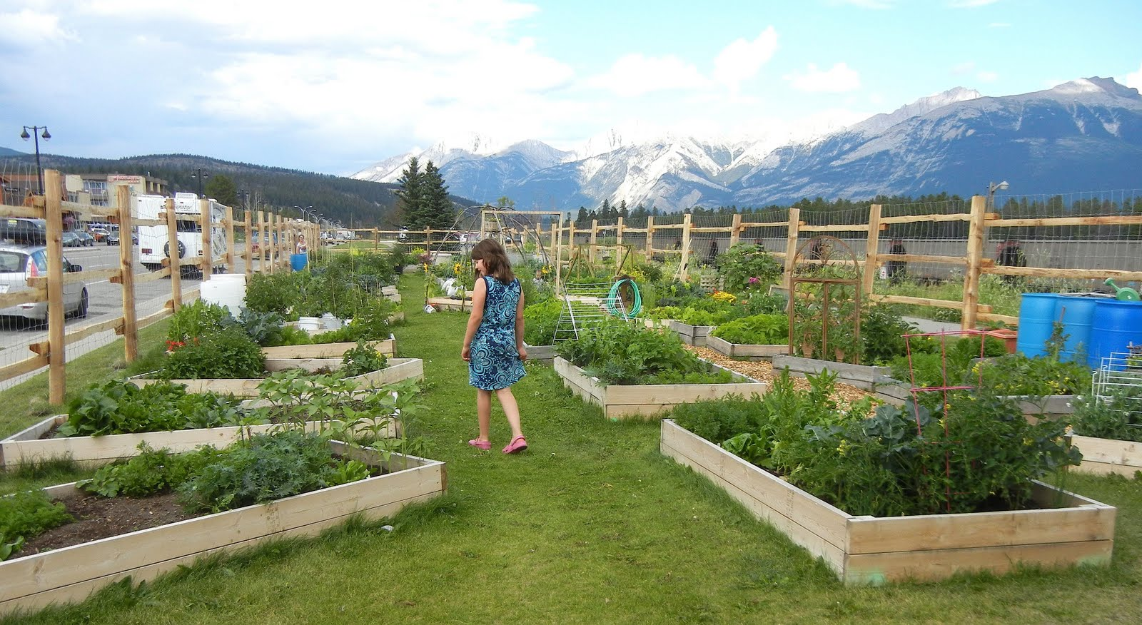 Pics For Community Vegetable Gardens