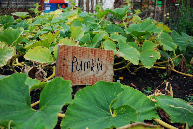 Pumkin pumpkin sign - Gorgie City Farm