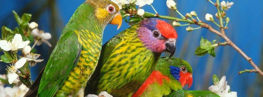 Une image de couverture facebook perroquet