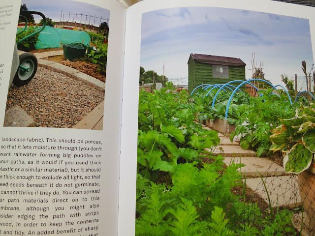 Photo of page 31 from RHS: Half-Hour Allotment by Lia Leenderzt.