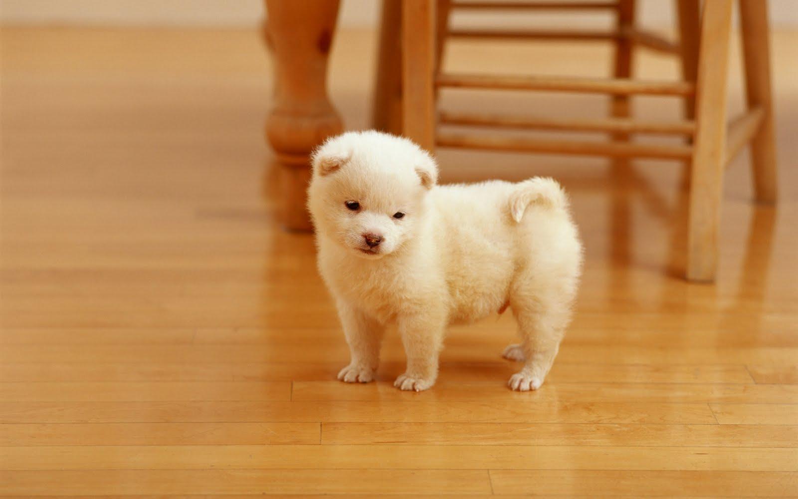 Un cachorro muy tierno - Lovely puppy (Wallpaper de 1920x1200)
