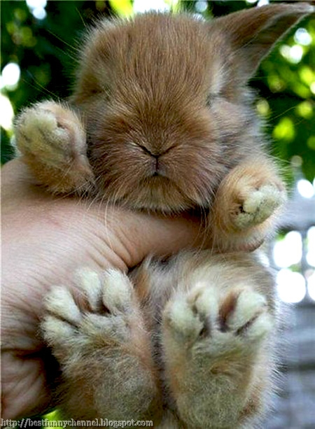 The most fluffy bunny in the world