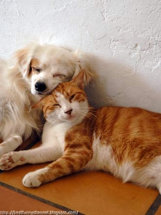 Cat and dog together.
