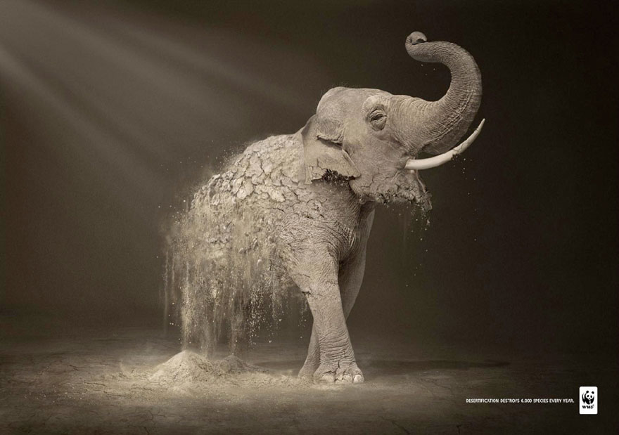 WWF: Desertification Destroys 6,000 Species Every Year