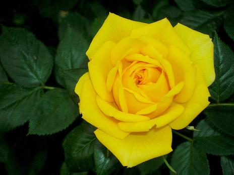 Forever wedding planner giugno 2012 - La rosa racconta la vita dei divi ...