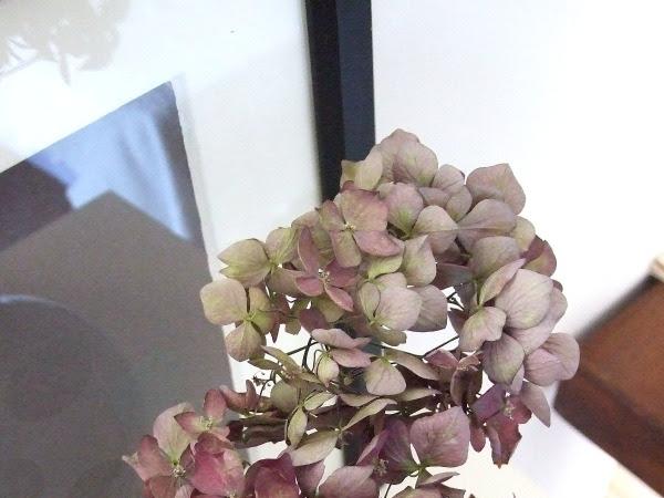 Hortensia seca