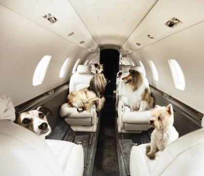 private jet charter service allowing pets animals dogs and cats