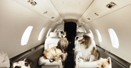 Can You Bring Your Dog On A Chartered Jet